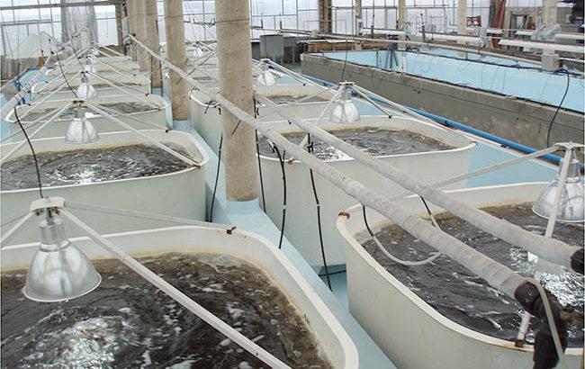 acuicultura-cantabria