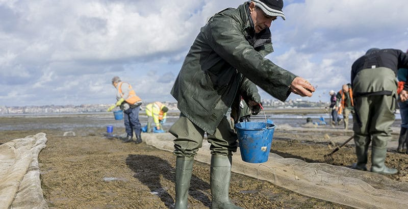 foto-para-noticia-curso-cultivo-moluscos-mariscadores